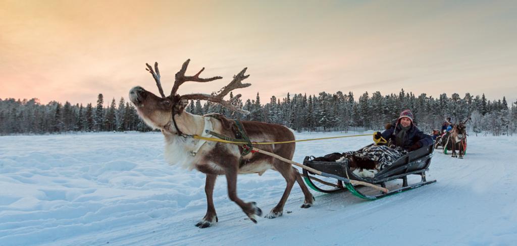Entdecken Sie die exotische und unberührte Natur Lapplands bei einer Rentiersafari. Foto: Sergei Anashkevych