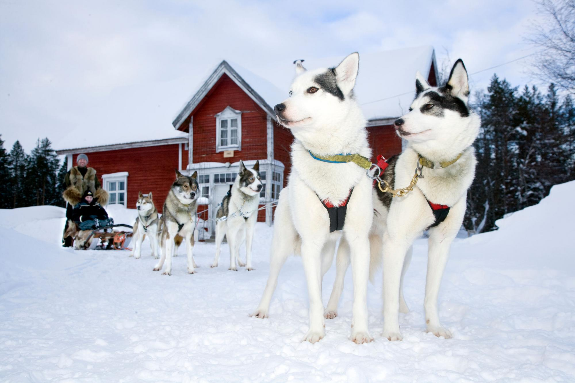 Für die perfekte Abwechslung sorgen unter anderem Huskytouren. Foto: Ranua Wildlife/Visit Finland
